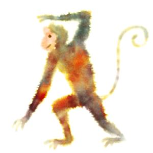 Tomuto roku vládne Opice