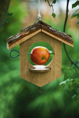 Dobrým tipem je dát ptákům jablíčko.