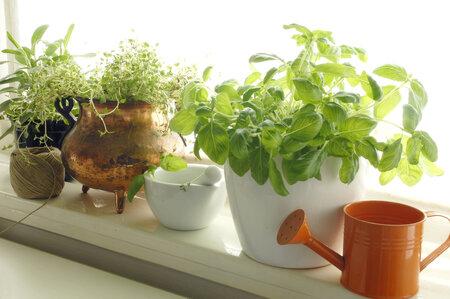 Nejjednodušší a hlavně nejlevnější je vypěstovat si bylinky ze semínek, kterých je právě teď v obchodech velký výběr.