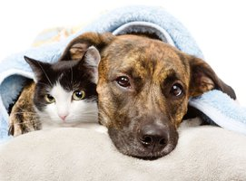 Silvestrovský stres pro psy a kočky. Jak ochránit své mazlíčky na přelomu roku?