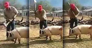 Farmář chtěl porazit sekyrou prase, sejmul ale sám sebe