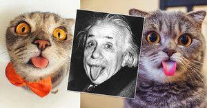 Kočičí Einstein hvězdou Instagramu: Proč ale slavná kočka vyplazuje jazyk?