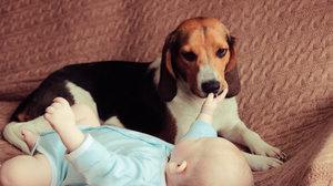 Nejvěrnější přátelé: Podívejte se, jak psi a kočky chrání novorozené děti