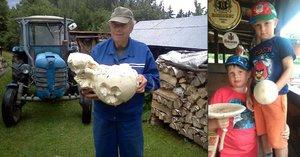 Rostou jako houby po dešti! Na Jablonecku našli raritní vatovec, měřil 150 cm