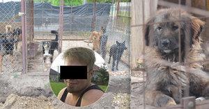 Psi v Lužci roztrhali malého Mirečka (†5): Policie ukončila vyšetřování, šokující závěry kynologa!