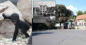 Zoo slaví 85. narozeniny: Podívejte se, jak se za ta léta změnila!