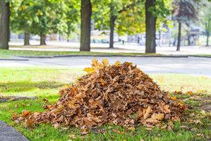 Padá u vás listí napadené klíněnkou? Praha 7 na něj rozdává speciální pytle