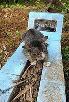 Dojemné! Tato věrná kočička chodila na hrob svojí paní ještě rok po její smrti
