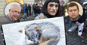 Politici vs. zabíjení zvířat pro kožichy: Kdo chce zákaz a kdo je teď spokojený?