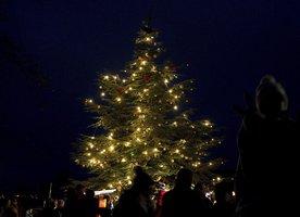 Vánoční strom rozsvítí i pražská zoo: Vstupné v neděli odpoledne bude za korunu