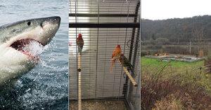 Útulek se stará o exotická zvířata. Jeli i pro žraloka ve Vltavě či papouška-zloděje