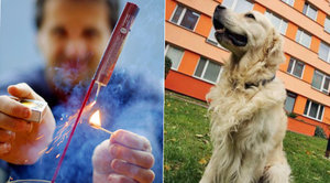 Silvestr: Noční můra psů. Před stresem z rachejtlí pomohou homeopatika, feromony nebo chlácholení