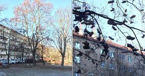 """VIDEO: Na stromě v Krči """"rostou"""" boty! Radnice je vždy sundá, ale zase se objeví"""