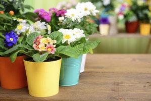 Petrklíče, hyacinty, narcisy: Jak na to, aby vydržely i v interiéru