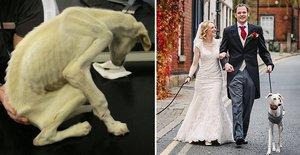 Opuštěné štěně málem nepřežilo! Nakonec dovedlo své páníčky k oltáři