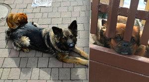 Šimon (5) zmizel i se dvěma psy: Debora a Leon ho hodiny hřáli ve křoví