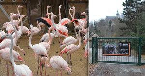 Děti napadly plameňáky v jihlavské zoo: Jak se k nim dostaly a kudy se daly na útěk?