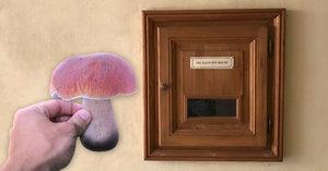 Nevíte, co jste našli za houbu? Strčte ji do schránky a dozvíte se to