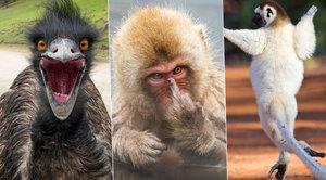 Rozjařená divočina: Jak to vypadá, když zvířata blbnou?