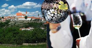Nejlepší vinobraní v Česku? Ve Znojmě si přijdou na své milovníci dobrého vína i muziky!