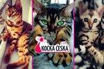 Kočka Česka 2014: Souboj začíná! Hlasujte a zvolte šampióna svého kraje