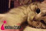 Kočka Česka 2014: Známe finalisty, vyberte šampióny svého kraje!