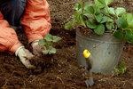 7 tipů, jak využít lógr. Použijte ho jako hnojivo, ale i při nákupu parfému