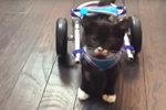 Malý Cassidy chodí díky speciálnímu vozíčku.