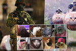 Bruselský zátah se proměnil v kočičí ofenzívu! Lidé na Twitteru tak pomáhali v boji proti teroristům