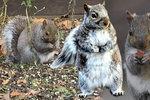 Veverky rády jí a baculaté ženy v nich hledají kamarádky.