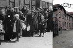 Unikátní výstava Osvětimské album: Ženy i děti? Rovnou do plynu