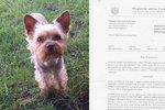 Yorkšíra jí roztrhali volně puštění psi: Magistrát napařil truchlící ženě pokutu