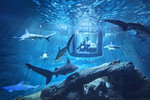 Unikátní nabídka: Užijte si noc v podvodní místnosti mezi žraloky! Soutěžit mohou i Češi