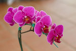 Pěstování orchidejí od A do Z: Přestaňte je rosit a dejte je na správné místo!