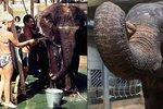 Miláček zoo: Slonice Gulab za 50 let života stihla připlout z Dillí do Prahy a zachránit život