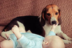 V mnohých domácnostech se s napětím očekává, jak novorozené miminko přijme starší sourozenec, jinde se musí vypořádat s reakcí psa nebo kočky. Ne každý čtyřnožec totiž nese nového člena smečky s libostí. Někteří se ale od začátku chovají jako ti nejvěrnější strážci pokladu. Podívejte se!