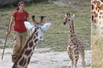Žirafí mládě se má »jako prase v žitě«: Starají se o něj ošetřovatelé, máma i tety