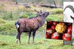 """Češi sestavili """"superseznam nechtěných"""": Koza, jelen i kaštany jsou nežádoucí"""