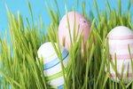 Velikonoční osení: Pravý čas ho zasadit