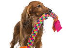 Levná hračka pro psa: Vyrobte si ji sami ze starého trička