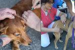 V Praze očkují psy bezdomovců. Během akce se našel jeden ztracený mazlíček