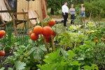 Nové komunitní centrum u Palmovky: Vyhlédněte si záhon a pěstujte rajčata