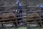 Úchyl znásilnil koně na farmě: Rozčílená přítelkyně mu dala kopačky!