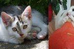 Babetka, Kiki nebo Mišánek: O víkendu budou na výstavě hledat domov desítky koček