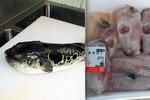 Supermarket omylem prodal prudce jedovatou rybu. Poplach hlásí v Japonsku