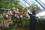 Orchideje pod nohama i nad hlavou: Botanická vystavuje ty nejvzácnější kusy