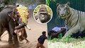 Proč museli v zoo zastřelit gorilího samce: Takhle to vypadá, když zvířata zuří!