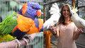 Opeření krasavci se ukážou Praze: Další ročník nejstarší výstavy papoušků proběhne na Albertově