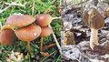 Začíná houbařská sezona: Co všechno se už dá v lese najít?
