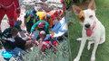 Fena zachránila paničku: Žena spadla z útesu, mazlík sehnal pomoc